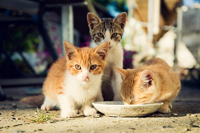 Cute stray cats being fed